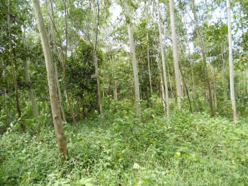 Community forest in Nepal