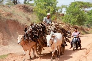 People in Nyaung Gyi Village use palm leaves as a fuel source.