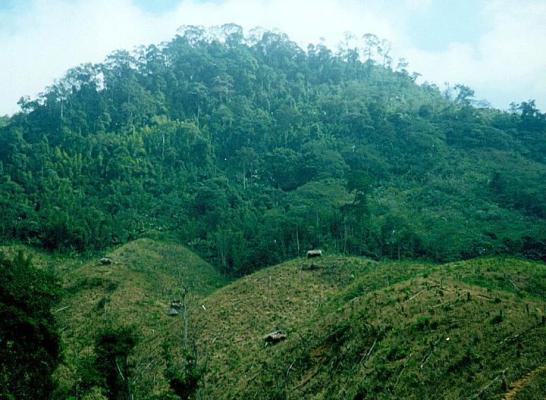 Swidden agriculture, northern Vietnam (Courtesy A. Ziegler, 1998)