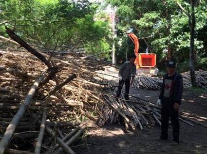 Workers prepare bamboo for chipping