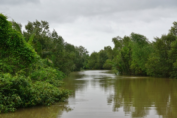 Mangroves along the estuary
