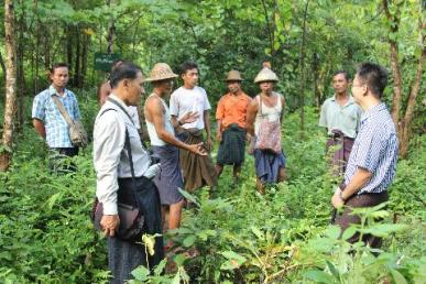 Ahleichaung CF Rakhine explaining iron wood management3