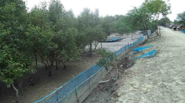 Mangrove restoration (wide)
